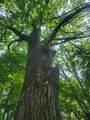 6779 Woods Trail - Photo 14