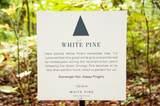 19086 White Pine Drive - Photo 14