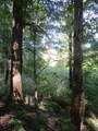 Wildwood Trail - Photo 14