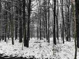 000 Buffalo Trail - Photo 7