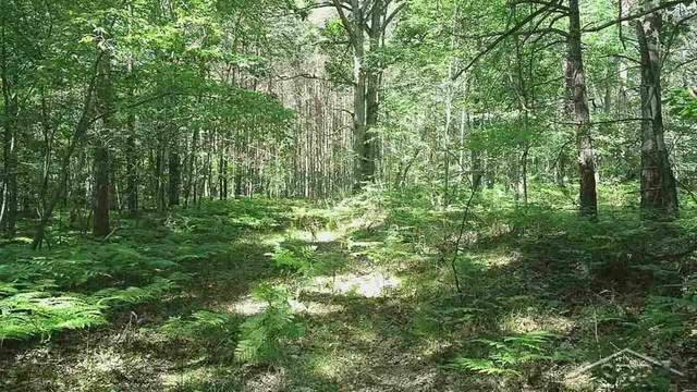 1724 S Nine Mile Rd, Lee Twp, MI 48640 (#61050005739) :: RE/MAX Nexus