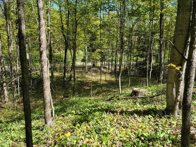 2.27 Acres N 84th Avenue, Hart Twp, MI 49420 (#67021019176) :: Real Estate For A CAUSE