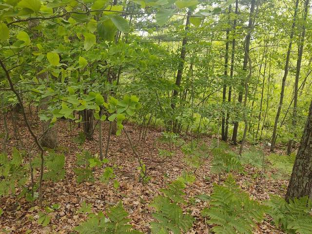 0 Hess Lake Drive, Grant Twp-Newaygo, MI 49327 (#65021019972) :: Real Estate For A CAUSE
