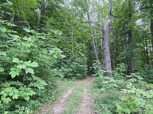 2.8 acres Taylor, Golden Twp, MI 49436 (#67021106924) :: The Mulvihill Group