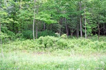LOT 6 Stagecoach Trail, Mckinley Twp, MI 48755 (#210045285) :: The Buckley Jolley Real Estate Team