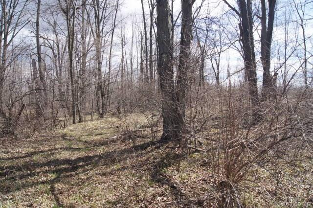 Vacant Land Columbiaville Road, Marathon Twp, MI 48421 (MLS #218011695) :: The Toth Team