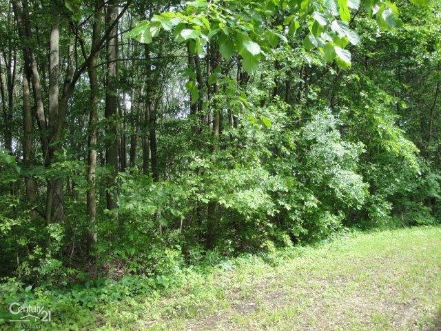 8562 Hollow Corners, Almont, MI 48003 (MLS #58031386195) :: The John Wentworth Group