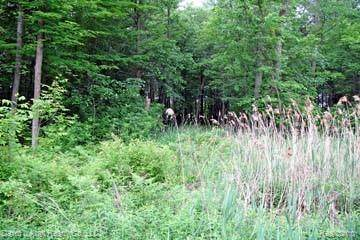 LOT 11 Stagecoach, Mckinley Twp, MI 48755 (MLS #2200027570) :: The John Wentworth Group