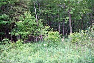 LOT 9 Stagecoach Trail, Mckinley Twp, MI 48755 (MLS #2200027574) :: The John Wentworth Group