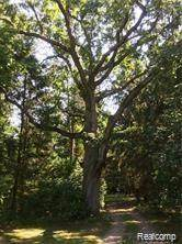 VL Pine Meadow Drive, Tyrone Twp, MI 48430 (#2200076261) :: BestMichiganHouses.com