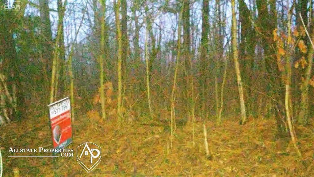 12017 Oak Road - Photo 1