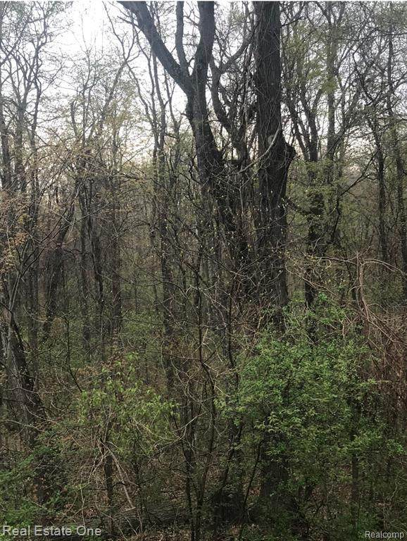 00 Wilderness, HAYES TWP, MI 48625 (#2210021439) :: Real Estate For A CAUSE