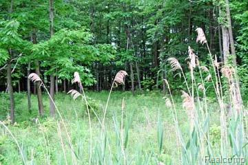 LOT 13 Stagecoach Trail, Mckinley Twp, MI 48755 (#210044949) :: The Buckley Jolley Real Estate Team