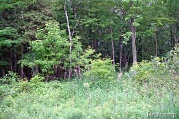 LOT 9 Stagecoach Trail, Mckinley Twp, MI 48755 (#210045213) :: The Buckley Jolley Real Estate Team
