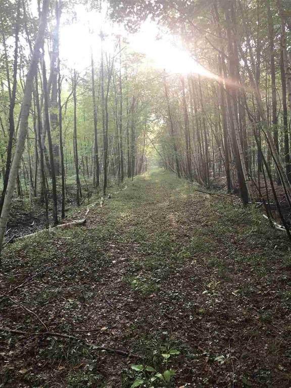 000 Buffalo Trail - Photo 1
