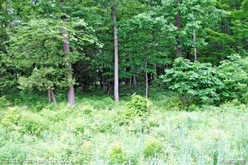 LOT 10 Stagecoach Trail, Mckinley Twp, MI 48755 (#210045179) :: The Buckley Jolley Real Estate Team