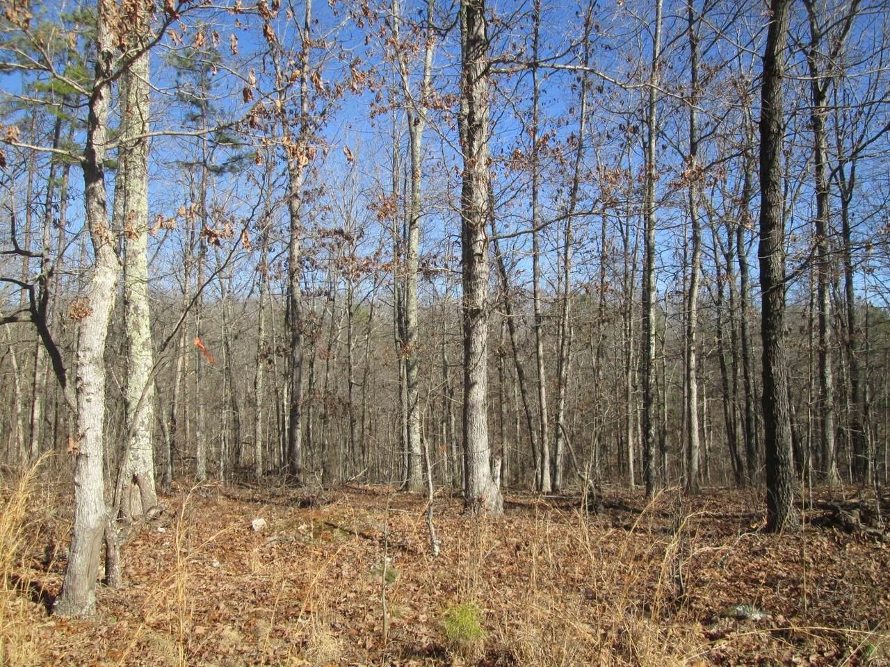 131 Big Tree Trail - Photo 1