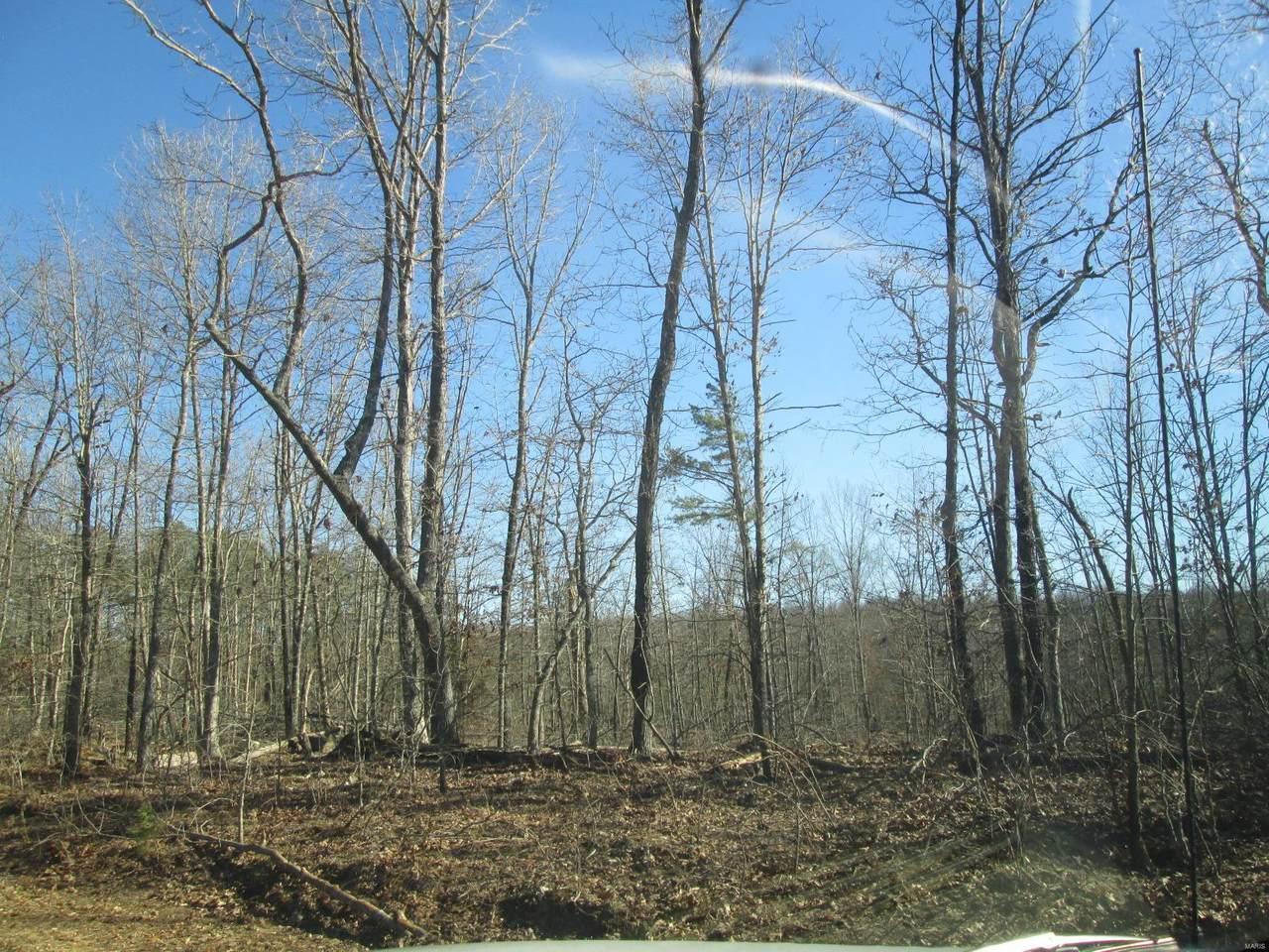 123 Big Tree Trail - Photo 1