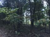 0 Bier Run (56+/- Acres) - Photo 8