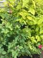 107 Elderberry - Photo 73