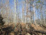 121 Big Tree Trail - Photo 1