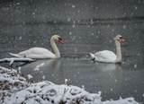 3618 Arbor Lake Drive - Photo 68