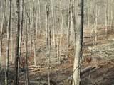 68 Pine Meadow Trail - Photo 1