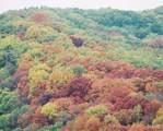17659 Rockwood Arbor Drive - Photo 15