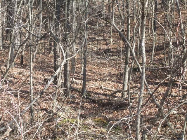 19 Apache Trail, Raymondville, MO 65555 (#21014185) :: Matt Smith Real Estate Group