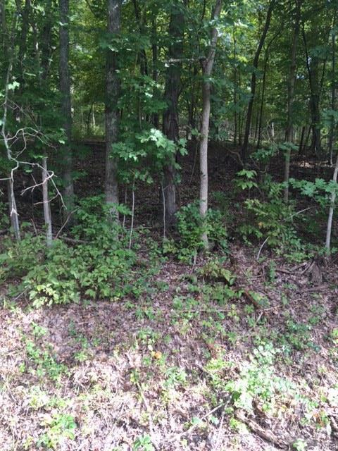 4491 Hidden Glen Ct, House Springs, MO 63051 (#18071337) :: PalmerHouse Properties LLC