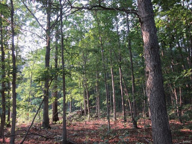 127 Big Tree Trail, Raymondville, MO 65555 (#19022804) :: Peter Lu Team