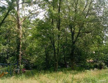 314 Oak Drive, Gray Summit, MO 63039 (#19055736) :: Peter Lu Team