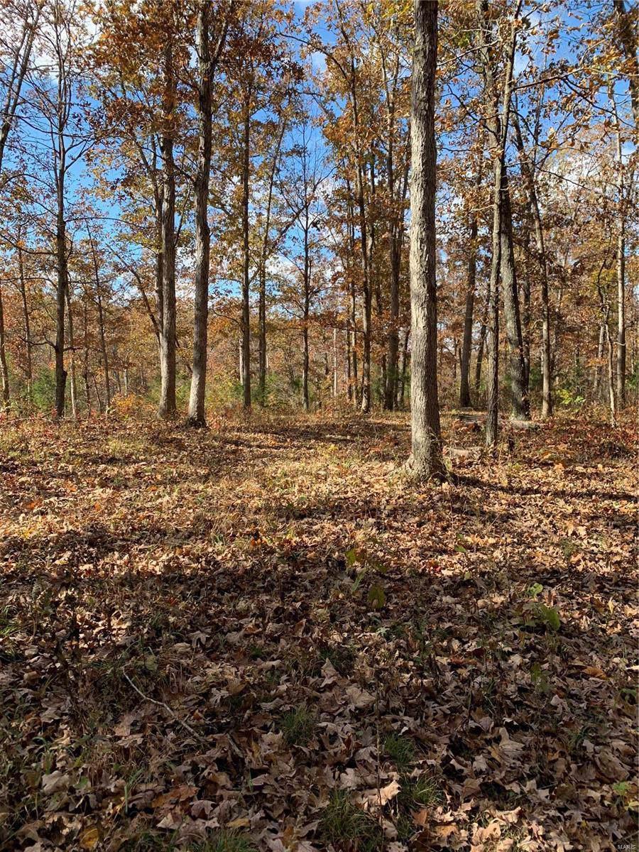 6 Tall Oak Trail - Photo 1