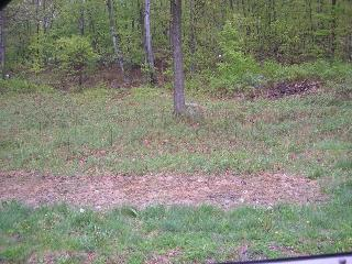 Breezy Hill Lot 21, Union Vale, NY 12594 (MLS #360044) :: Stevens Realty Group