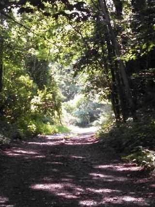17 Crow Hill Lane, Rhinebeck, NY 12572 (MLS #368480) :: Stevens Realty Group