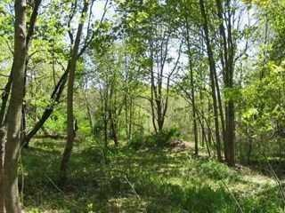 565 Plass Rd, Pleasant Valley, NY 12569 (MLS #375547) :: Stevens Realty Group