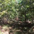 Lot 36 Cold Branch Rd - Photo 5