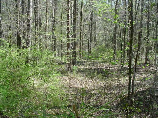 Lot 372 Lake Sinclair Drive, Sparta, GA 31087 (MLS #44566) :: Lane Realty