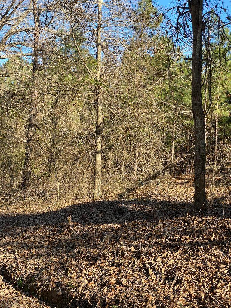 Tract D County Line Rd. - Photo 1