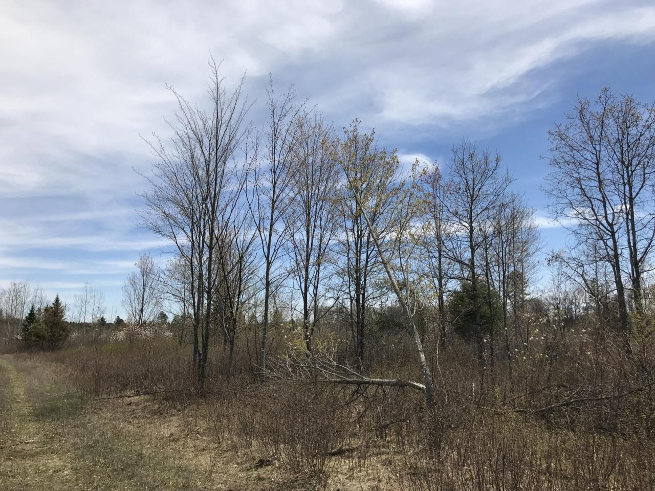 78 Acres Parkway Rd - Photo 1