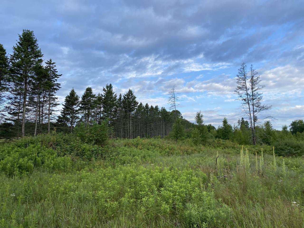 6.25 Ac Big Woods Lane - Photo 1