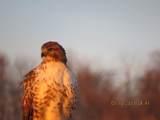 LOT 10 Grayhawk - Photo 3