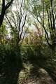 10218 Wildwood Ct - Photo 14