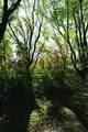 10218 Wildwood Ct - Photo 3