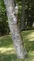 W9499 Butternut Rd - Photo 11