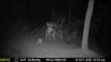 W410 Bluff Siding Rd - Photo 25