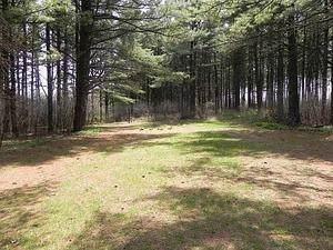 Lt1 Pine St - Photo 1
