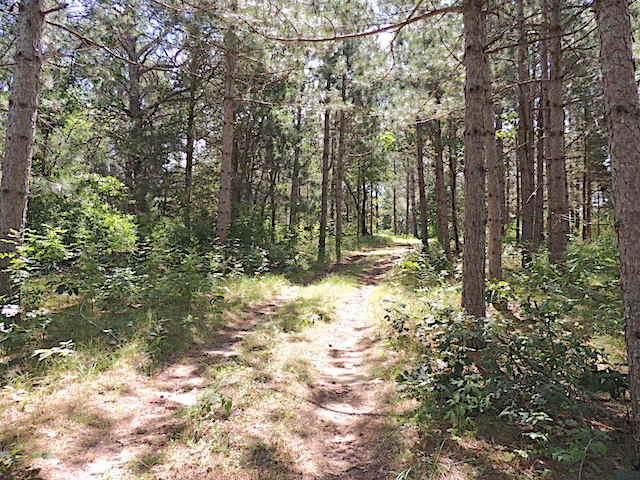 00 County Road A, Farmington, WI 54644 (#1676626) :: Tom Didier Real Estate Team
