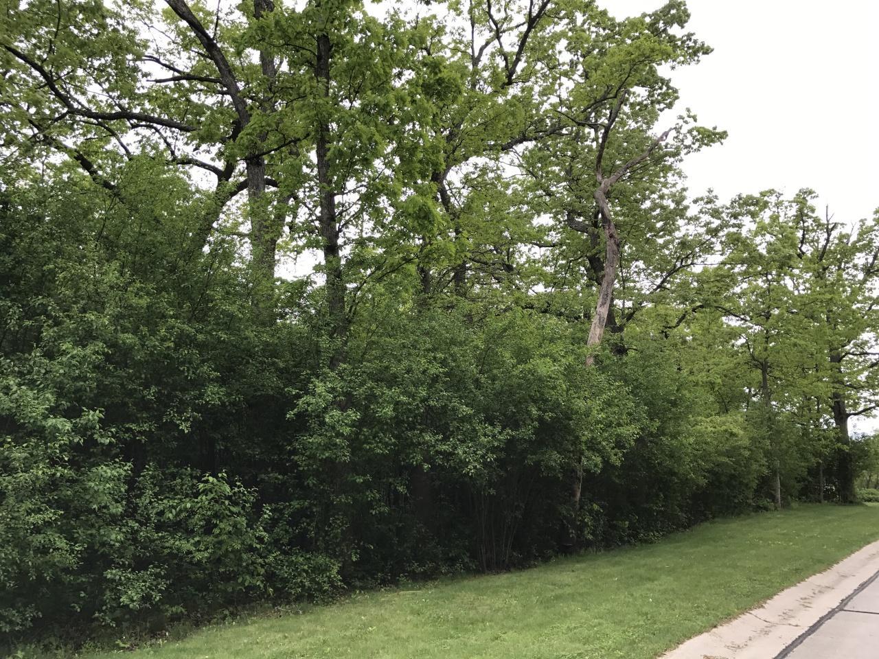 Lt6 Olde Oak Pass - Photo 1