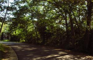 Lt77 Woods Ln - Photo 1